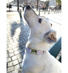 """Collier pour chien """"Lady""""-Accueil"""