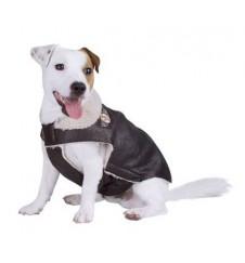 Manteau Aviateur pour chien-Accueil