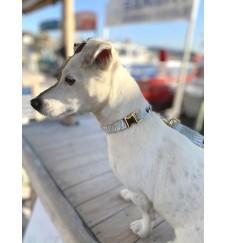 """Collier pour chien """"Mojito""""-Accueil"""